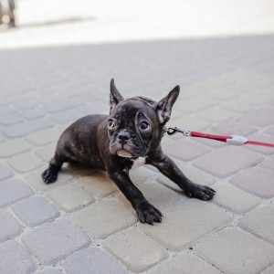 Dragging your dog to you will not teach a happy and reliable recall