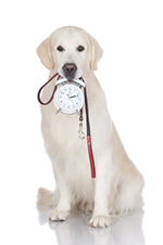dog-clock-leash-small-iStock_000047036100_Full