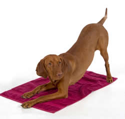 downward-dog-small
